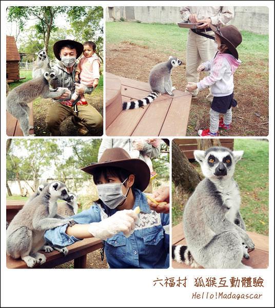 六福村 狐猴體驗,來去找朱立安國王玩囉!